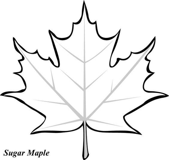 564x532 Maple Leaves, Leaf Template And Clip Art Stencil Leaf Template