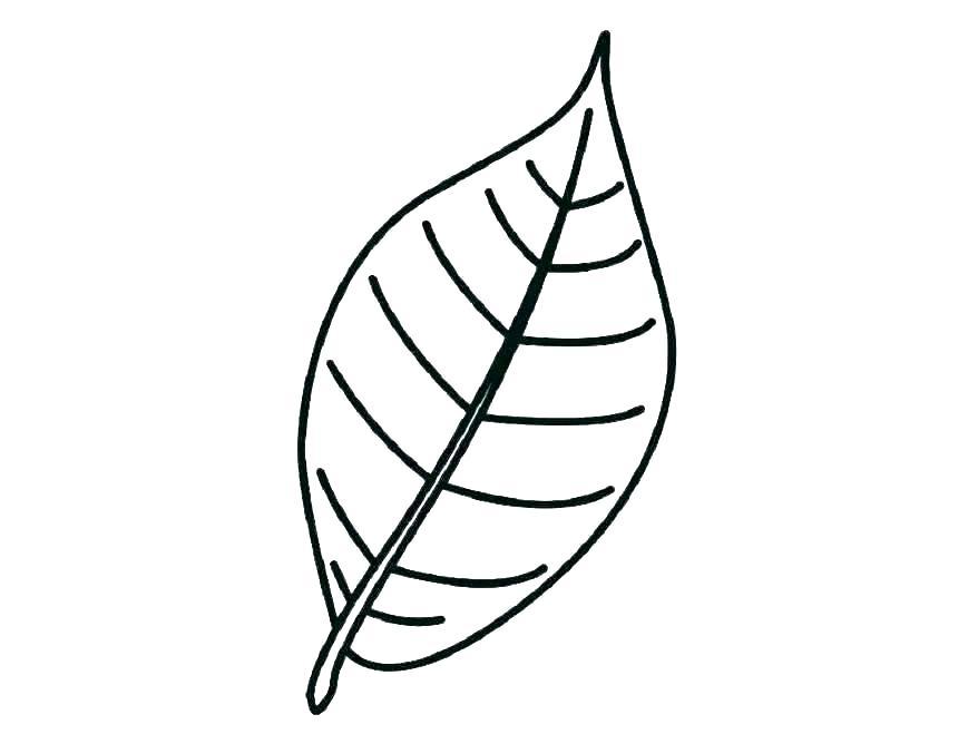 878x659 Holly Leaf Template