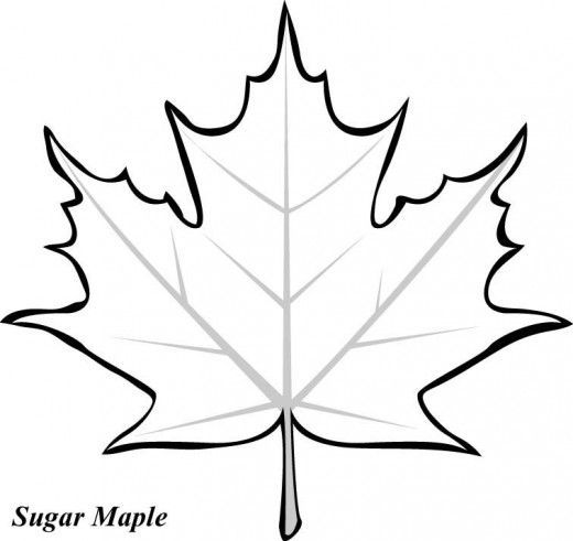 520x491 Thanksgiving Cut Outs My Traceables Leaf Template, Maple Leaf