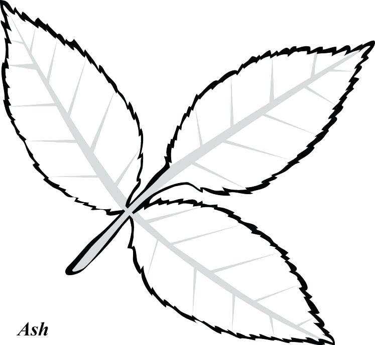 747x686 Easy Paper Leaf Template Flower Leaves