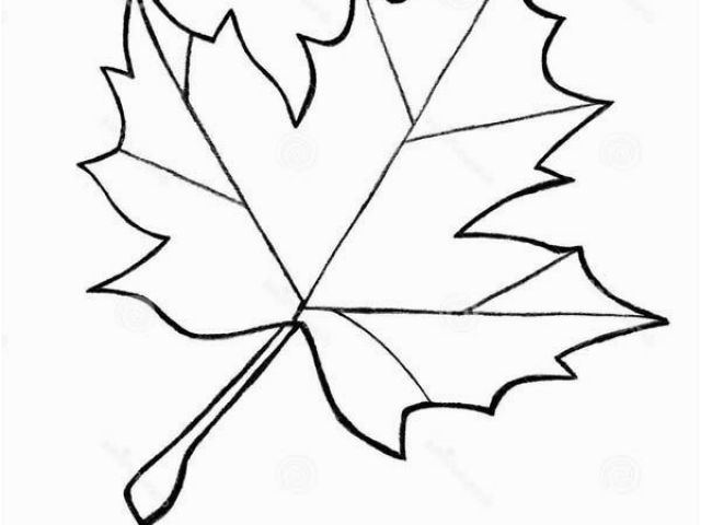 640x480 Maple Syrup Coloring Pages Sugar Maple Leaf Sketch Maple Leaves