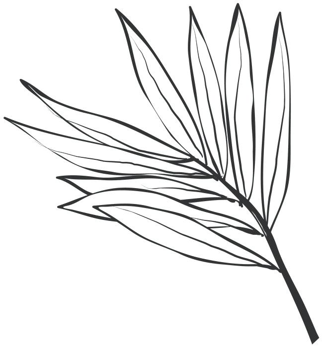 650x701 Drawing Leaves Drawing Leaves Meaning