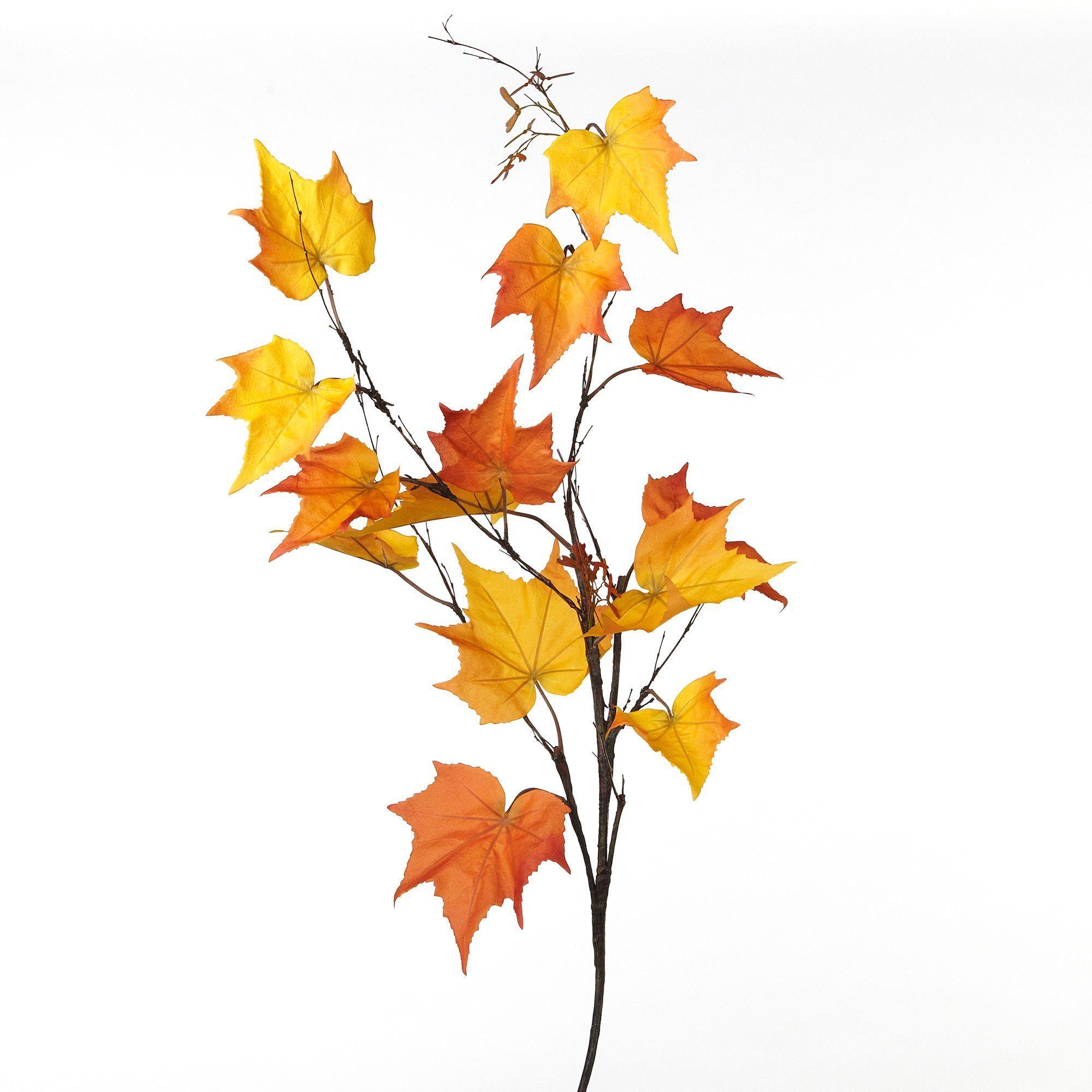 2000x2000 Fleur Maple Leaf Branch Spray
