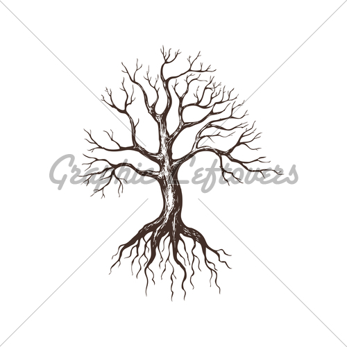 500x500 Maple Tree With Roots Graphic Images