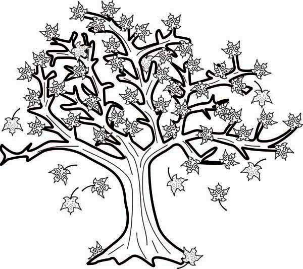 600x534 Maple Tree Coloring Sheet