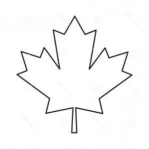 300x300 Stock Illustration Maple Leaf Outline Drawing Soidergi
