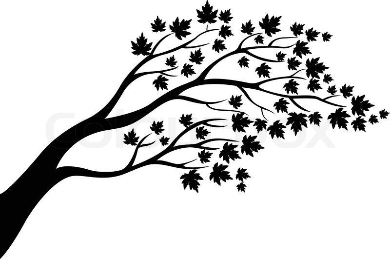 800x531 Vector Illustration Of Maple Tree Stock Vector Colourbox