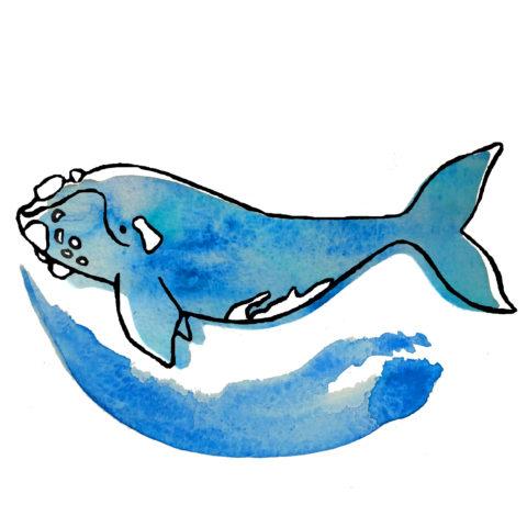 480x480 healthy whale, healthy ocean bow seat ocean awareness programs