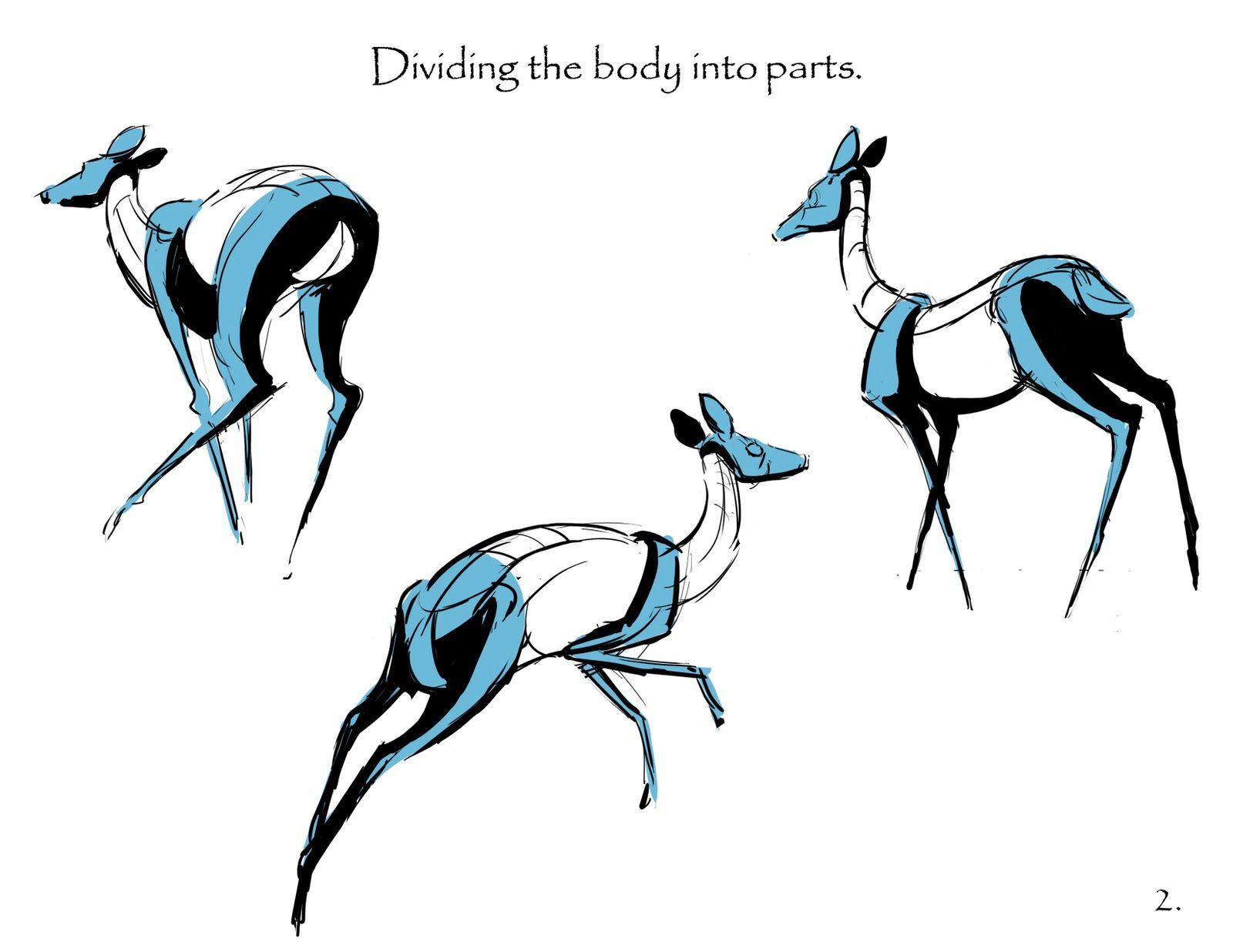 1600x1236 drawing animals with martin wittig martin wittig