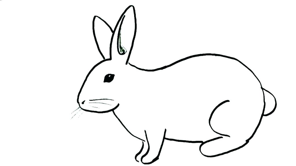 1024x576 draw rabbit how to draw a rabbit and how to draw a rabbit bunny