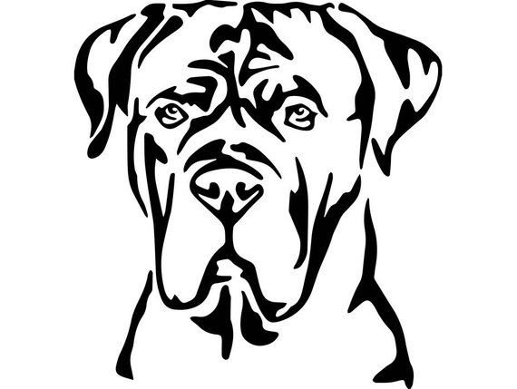 570x429 image cane corso cane corso, cane corso mastiff, hound puppies