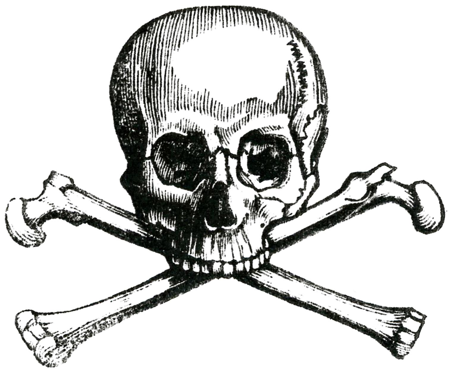 Mean Skull Drawings