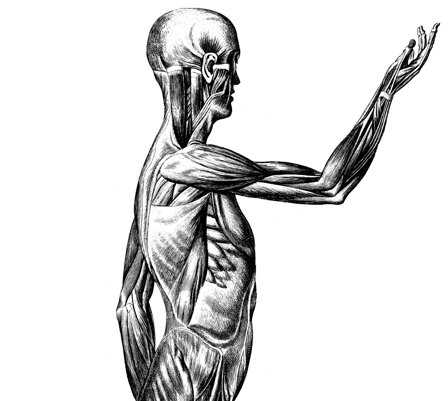 Medical Body Drawing