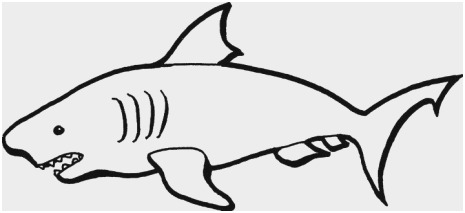 465x213 Free Printable Shark Coloring Pages Awesome Great Coloring Pages