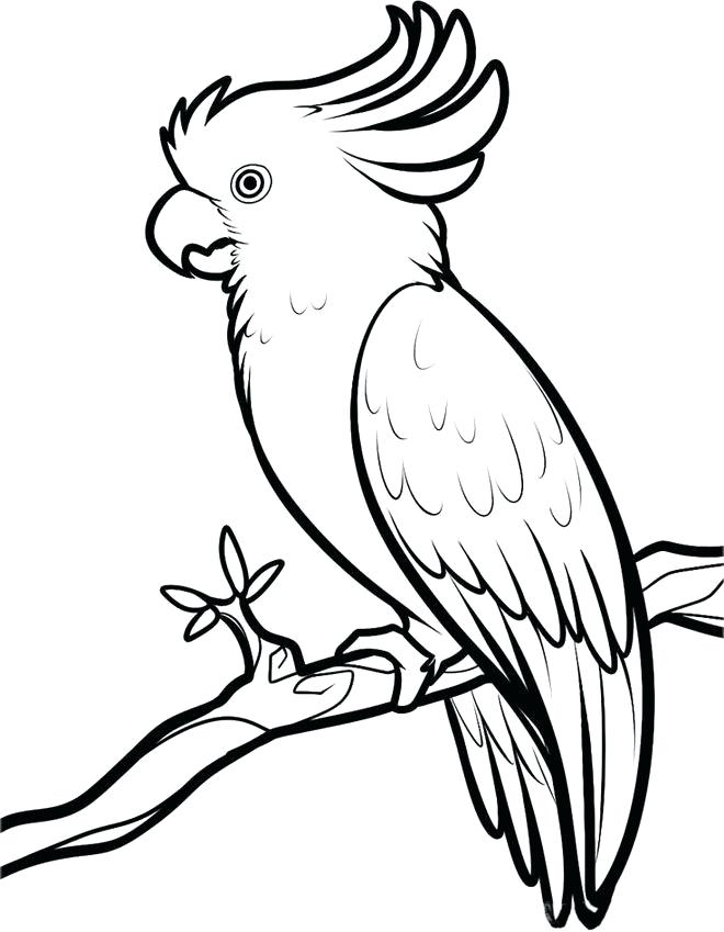 660x849 drawing of parrot parrot drawing of hand draw parrot sketch style