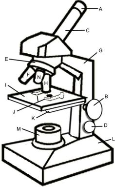 Microscope Drawing And Label