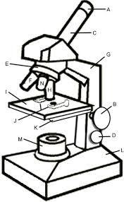 176x286 Image Result For Microscope Drawing Sanskar Teaching Science