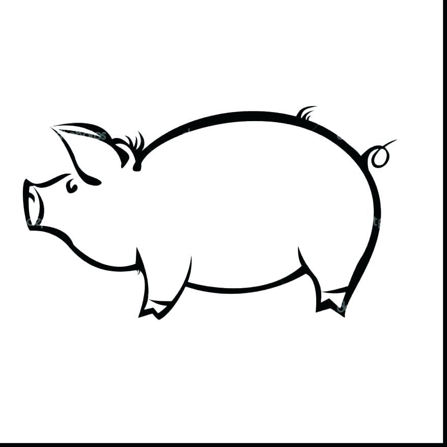 878x878 coloring pages of pigs pig drawings animals pig pig coloring