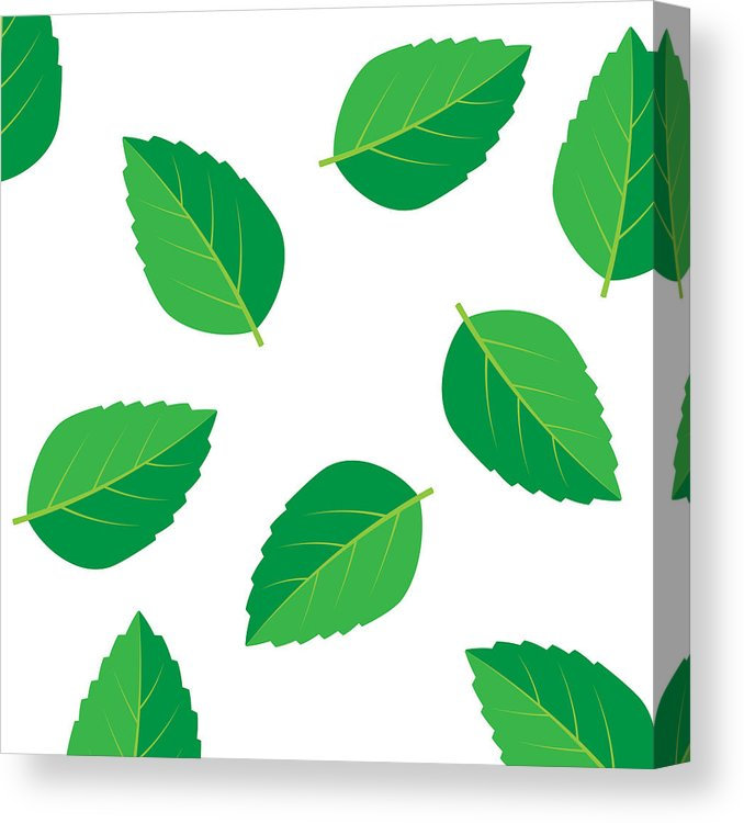 678x750 mint vector drawing mint leaves vector logo canvas print canvas