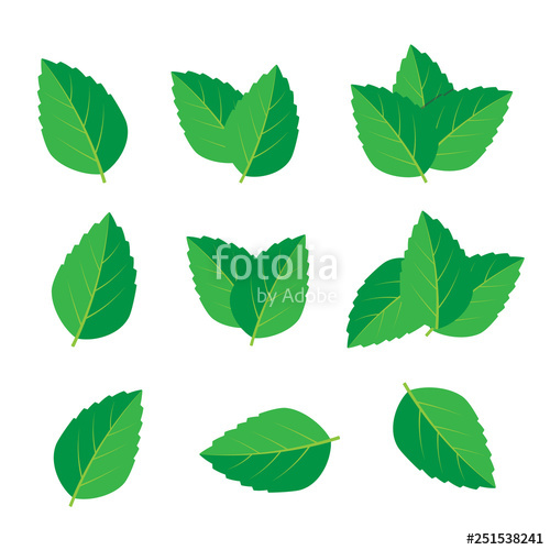 500x500 mint vector drawing mint leaves vector logo stock image