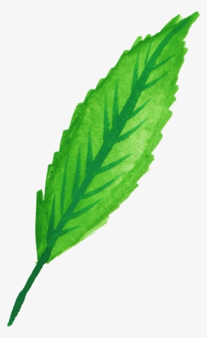 300x489 apple mint mint leaf peppermint drawing
