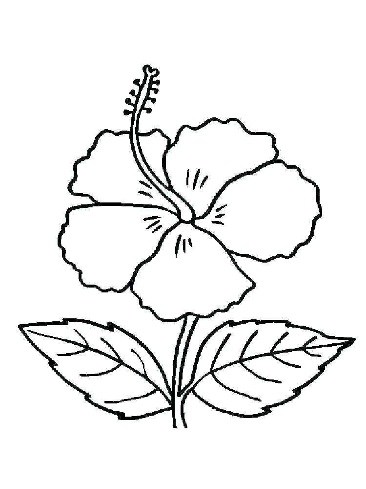 750x1000 mistletoe coloring pages mistletoe coloring pages free hand