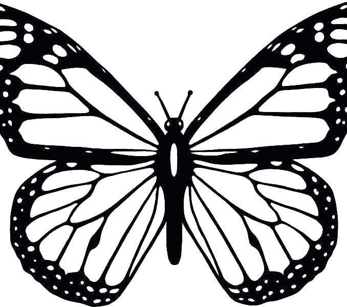 678x600 butterfly line abstract butterfly line symbol butterfly line art