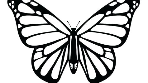 475x266 Drawings Of Butterflies Butterfly Drawings Butterfly And Rose