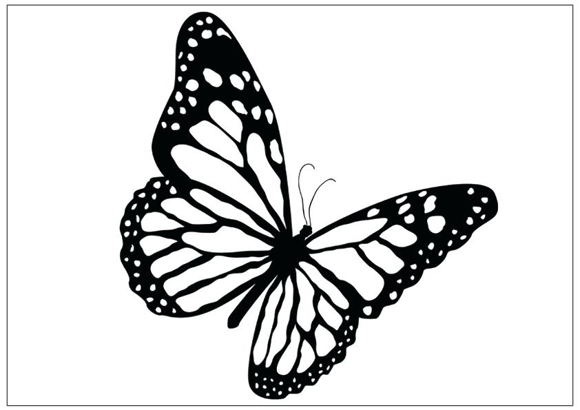 842x595 How To Draw Butterflies Flying Female Monarch Butterfly Flying