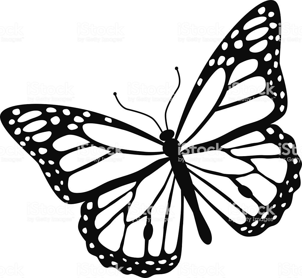 1024x940 A Vector Illustration Of A Monarch Butterfly In Black And White