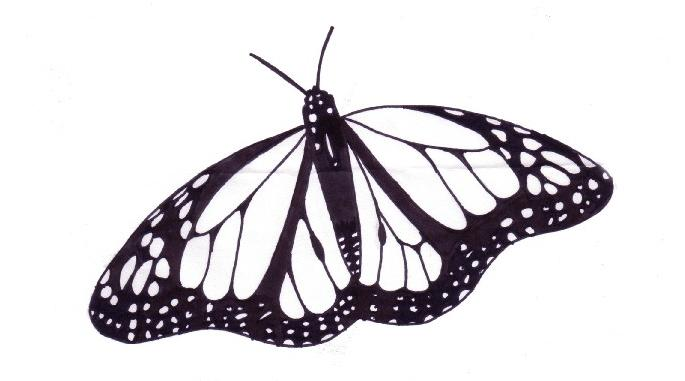 685x381 Monarch Butterfly Drawing Black And White