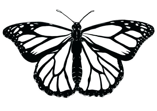 618x440 monarch butterfly flying outline colorful and outline ink monarch