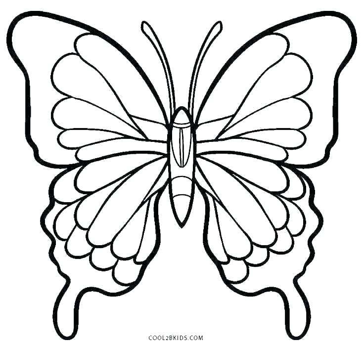 736x700 Monarch Butterfly Model