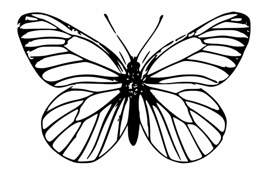 920x638 Monarch Butterfly Outline Drawing Template
