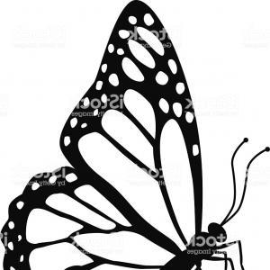 300x300 Monarch Butterfly Side View In Black And White Gm Soidergi