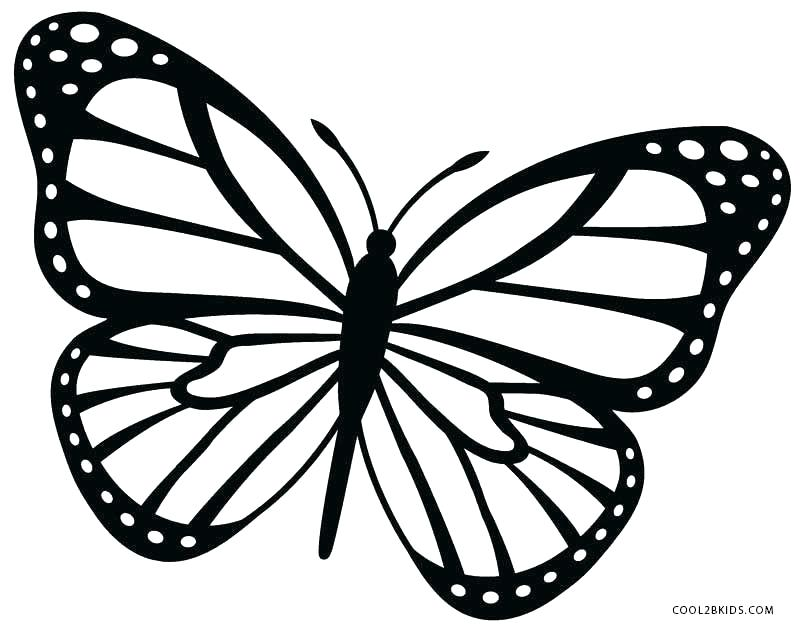800x628 Monarch Butterfly Template Creation Creatures Large Image Outlines