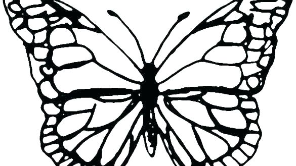 585x329 Outlines Of Butterflies Butterfly Outlines Butterfly Free