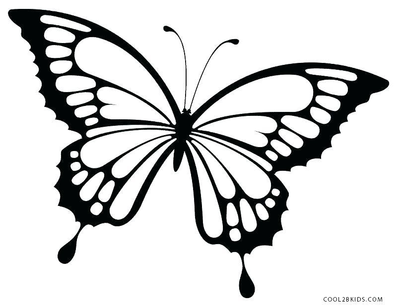 800x620 Butterflies Drawing