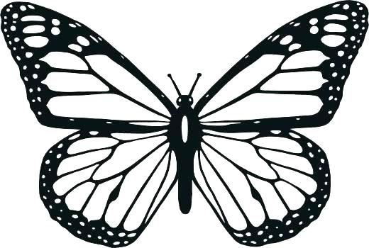 520x350 Coloring Pictures Of Monarch Butterflies