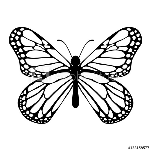 500x500 Monarch Butterfly Vector On Isolated White Background