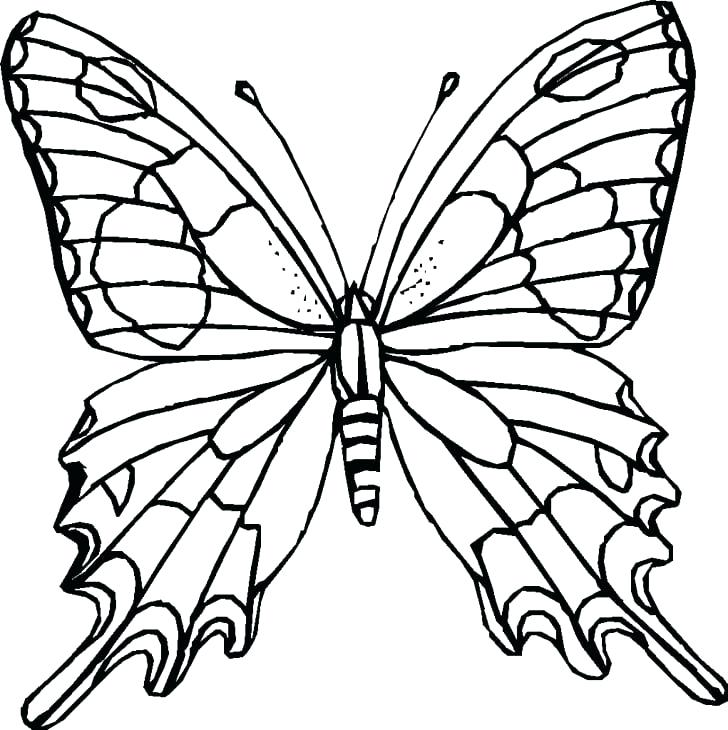 728x730 Monarch Butterfly Outline