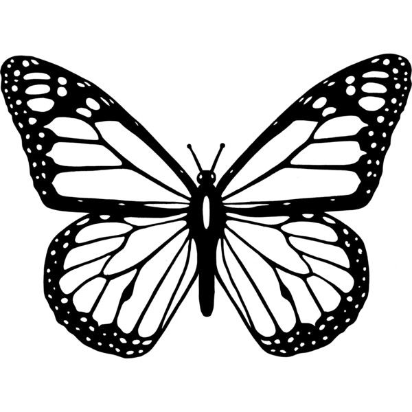 600x600 Black And White Butterfly Liked On Polyvore Featuring