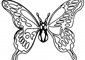 300x210 Butterfly Drawings Black And White Monarch Butterfly Drawing Black
