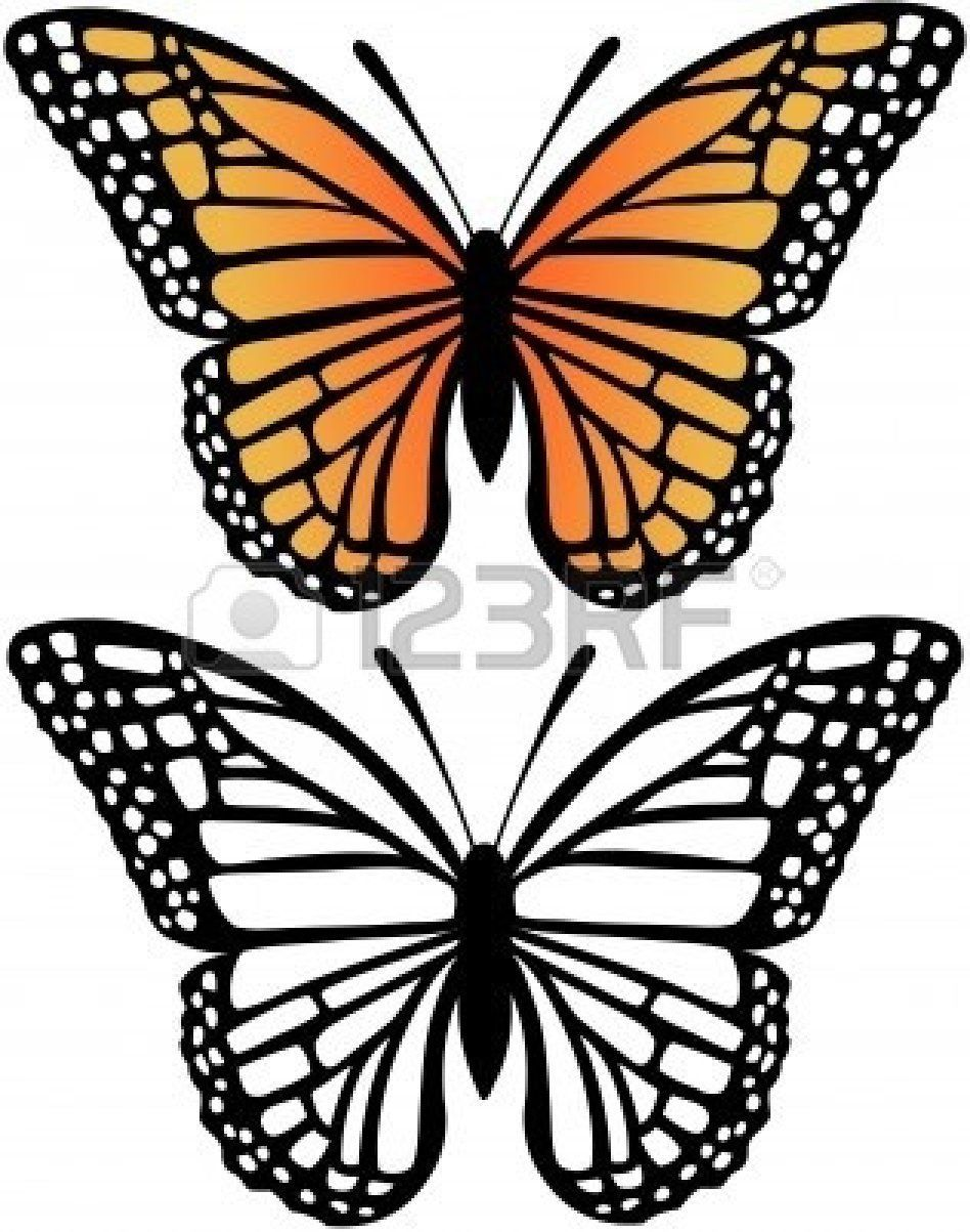 948x1203 Image Result For Side View Drawing Of A Monarch Butterfly Artwork