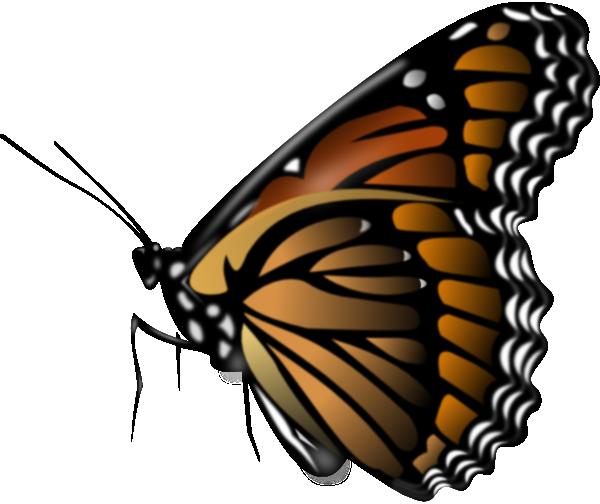 600x504 Monarch Butterfly Clip Art