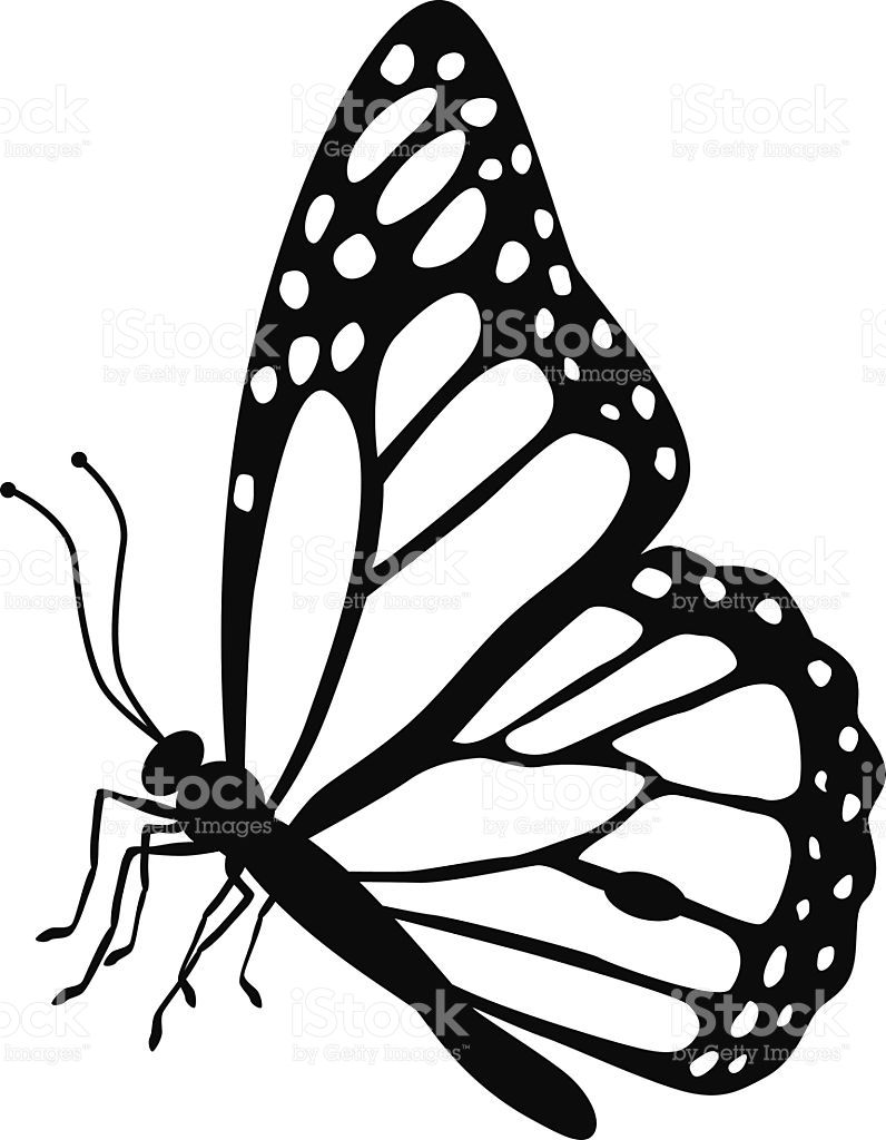 796x1024 A Vector Illustration Of A Monarch Butterfly Side View In Black