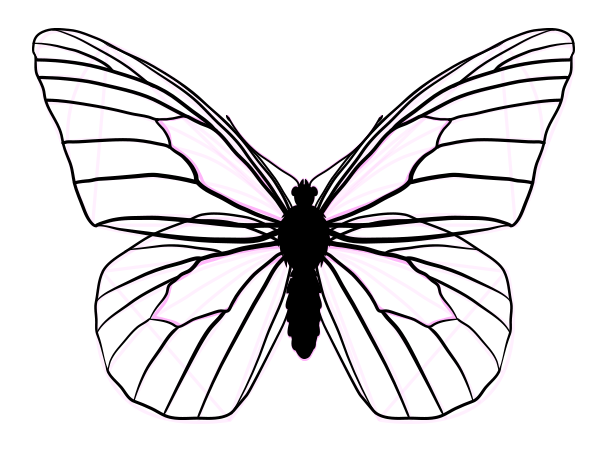 600x462 Monarch Butterfly Drawing Side