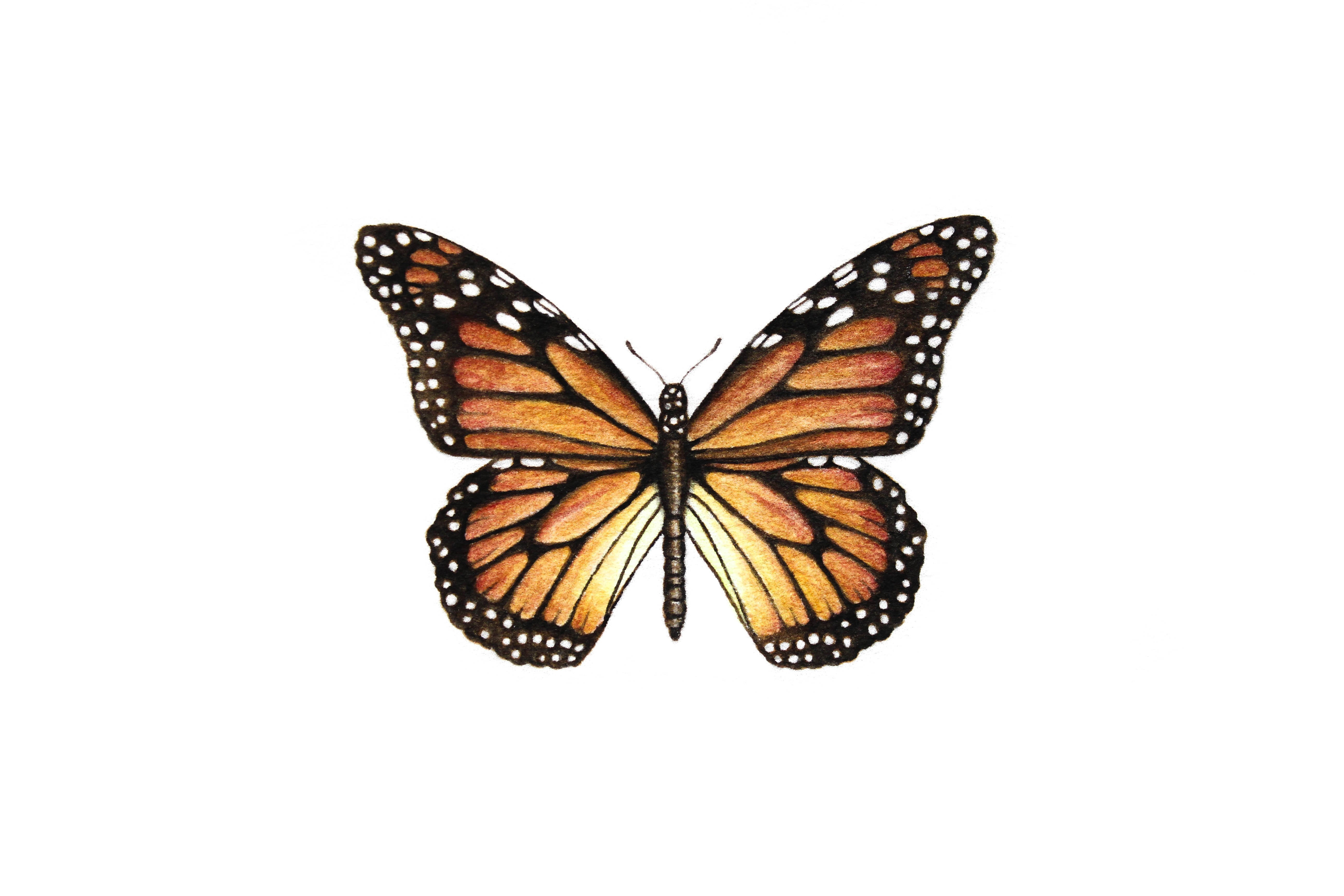 5184x3456 Monarch Butterfly Paintable Project Digital Download Greenleaf
