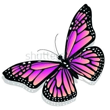 380x380 Butterfly Drawing Color Monarch Colorful Butterfly Drawing