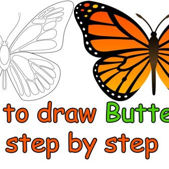 336x336 Butterfly Drawing Easy Side View For Beginners Step Method